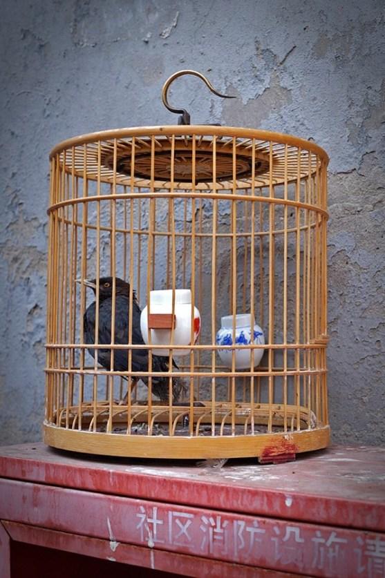 Klatki z ptakami wiszą prawie przy każdym sklepie, sklepiku czy straganie, tradycja tradycją, ale chyba nie do końca popieramy