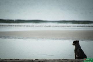 Pies też człowiek i na morze lubi popatrzeć :)