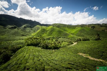 Cameron Highlands-39