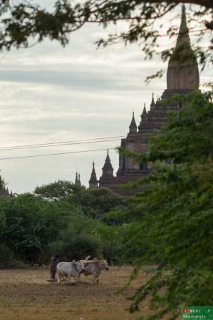 Bagan-25