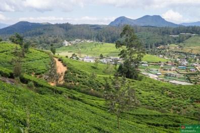 Widok na pola herbaty po drodze nad wodospad