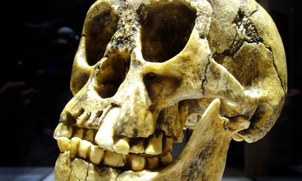 """Siguen las disputas sobre el cráneo de """"Hobbit"""" hallado en Indonesia."""