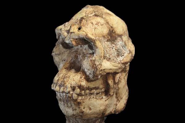 """""""Little Foot"""" podría ser el primer ancestro de los humanos modernos."""