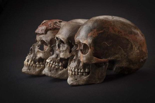 Recientes estudios revelan nuevos datos sobre los habitantes de la Edad del Hielo. Crédito: Escuela de Medicina de Harvard