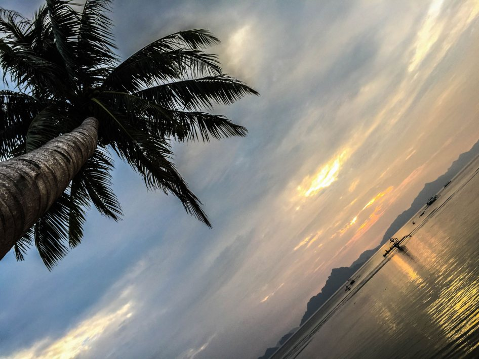 palm-tree-beach-sunset