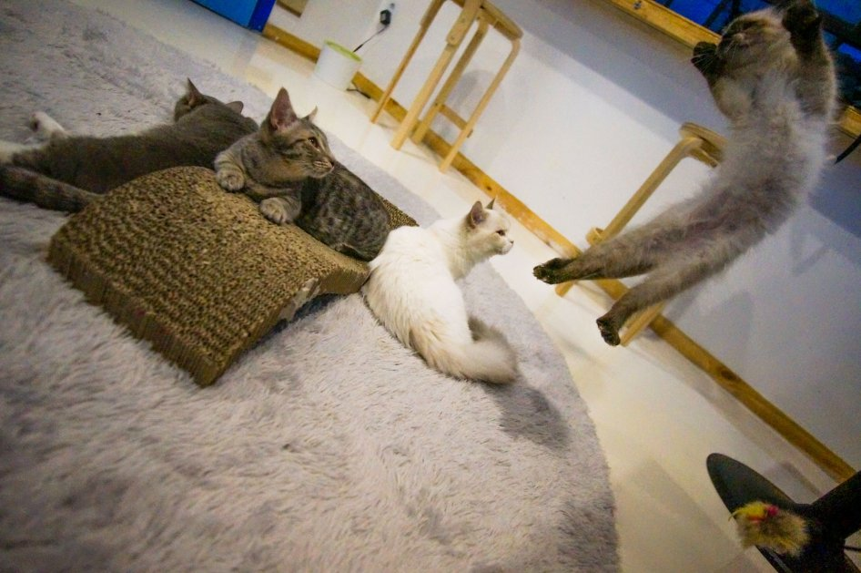 almost_cat-cafe-seoul