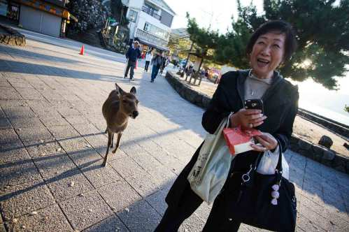 deer-fun-Itsukushima-Shrine