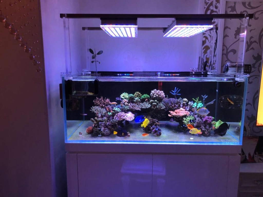 Led Licht Für Nano Aquarium Orphek Atlantik Led Aquarium Lighting Photos Reef2reef Saltwater