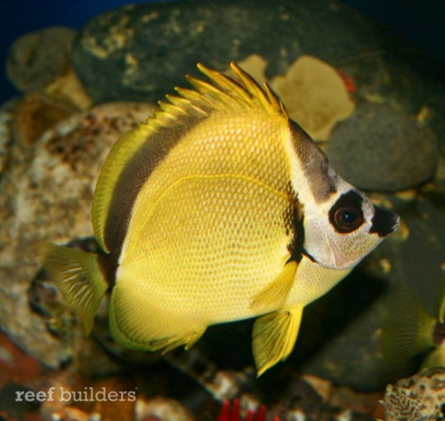 Denver Downtown Aquarium   Reef Builders   The Reef and Marine