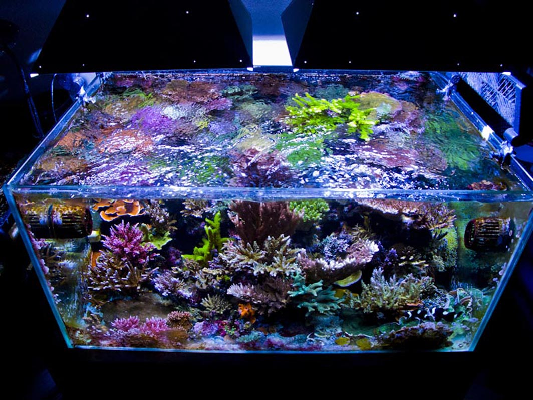 Nano Zee Aquarium Verlichting 20 Gallon Aquarium Reef 20 Gallon Reef Aquarium Group