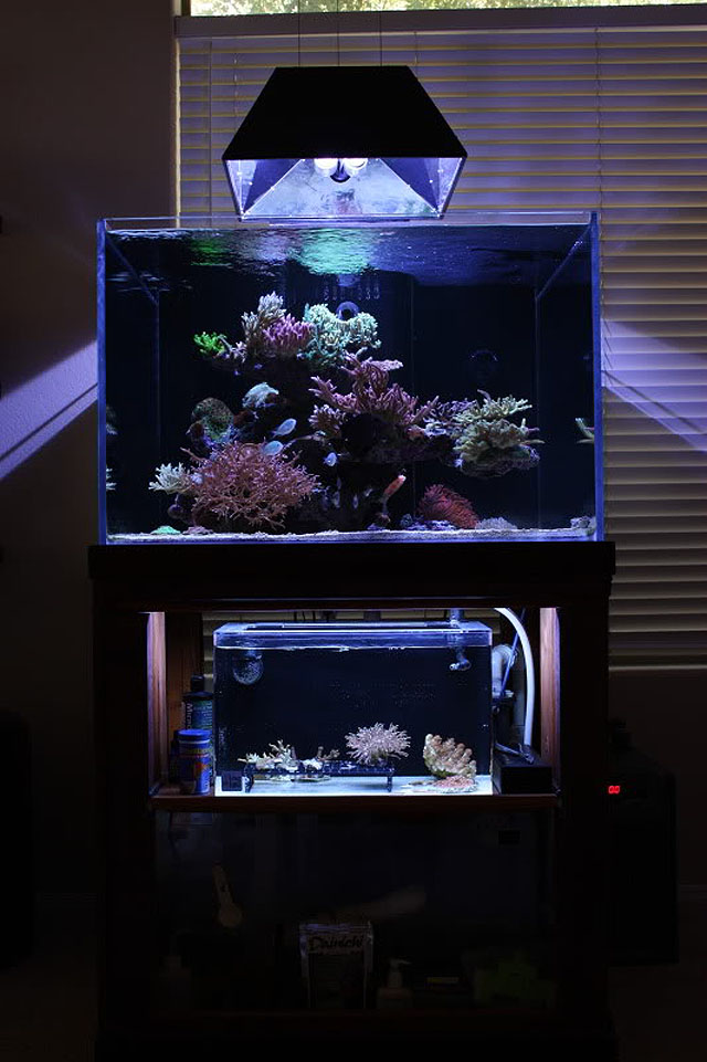 System 180 Berlin Reefkeeping Magazine - December 2011 Tank Of The Month