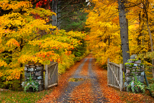 New England Fall Foliage Wallpaper Lane Donald Reese Photography