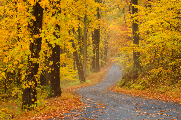 New Hampshire Fall Foliage Wallpaper Foggy Fall Path Donald Reese Photography