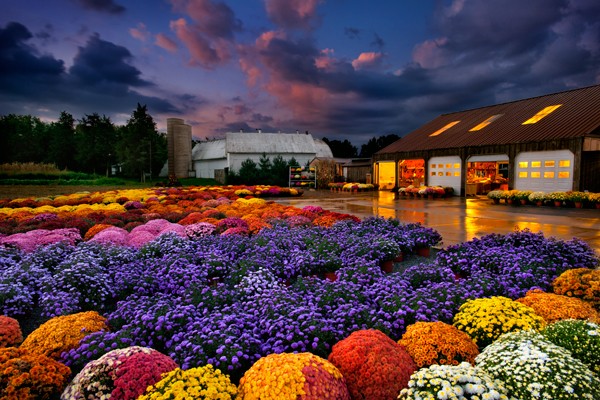 Fall Wallpaper With Pumpkins Mums Donald Reese Photography