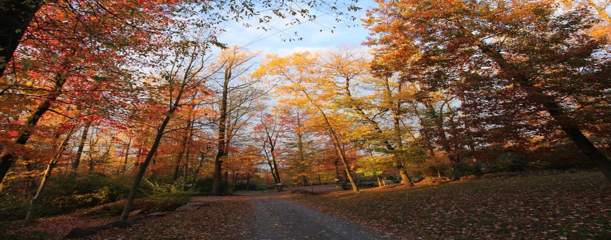 Tree_Fall_Retreat_Slider