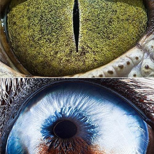 Fotos de ojos de animales desde cerca