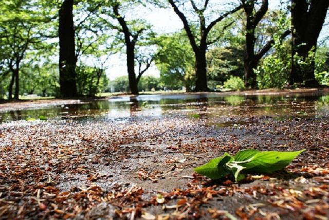 petricor despues lluvia