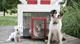 casa-perro-moderna-5