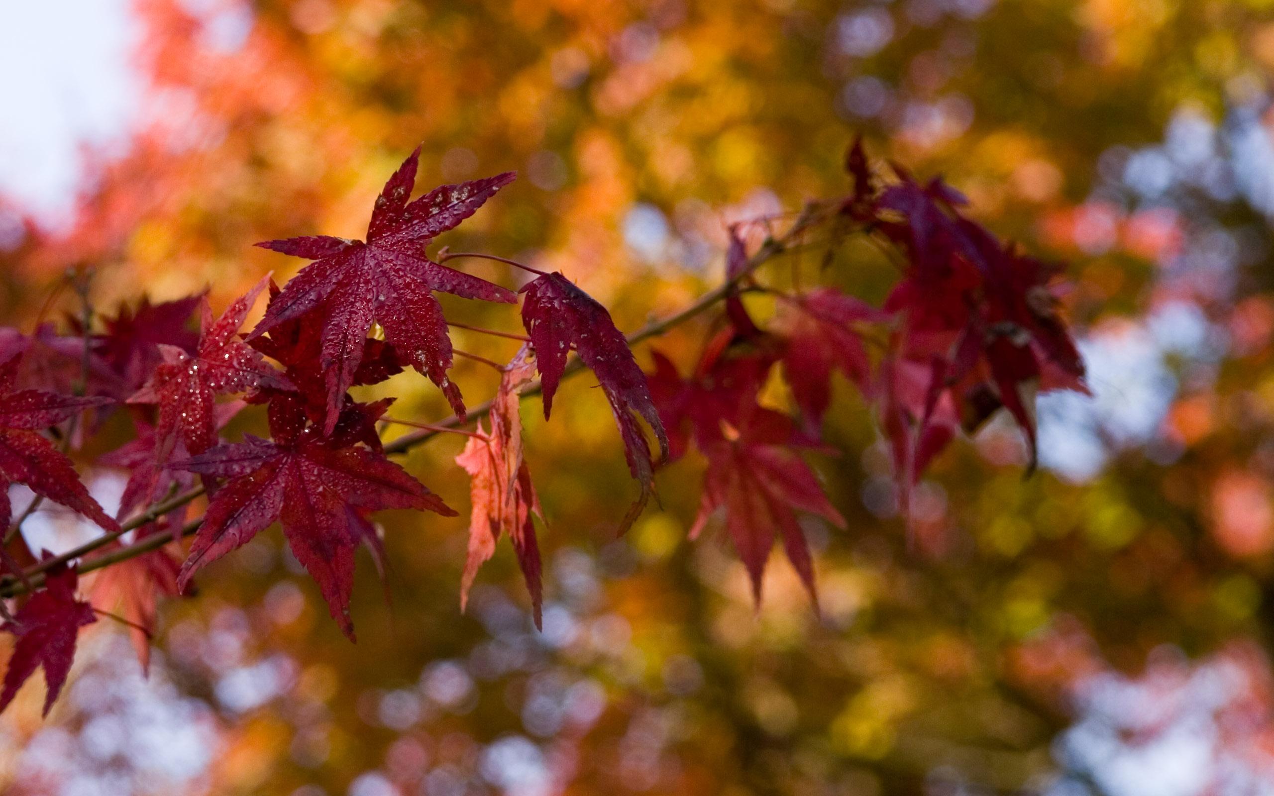 Fall Foliage Desktop Wallpaper Jeffrey Friedl S Blog 187 Kyoto Fall Foliage Desktops