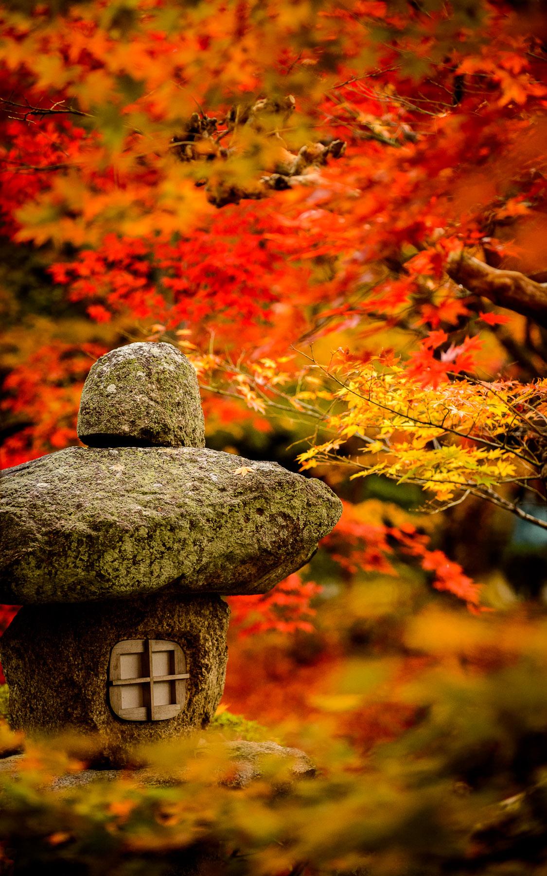 Maple Leaf Wallpaper For Fall Season Jeffrey Friedl S Blog 187 More Japanese Garden Desktop