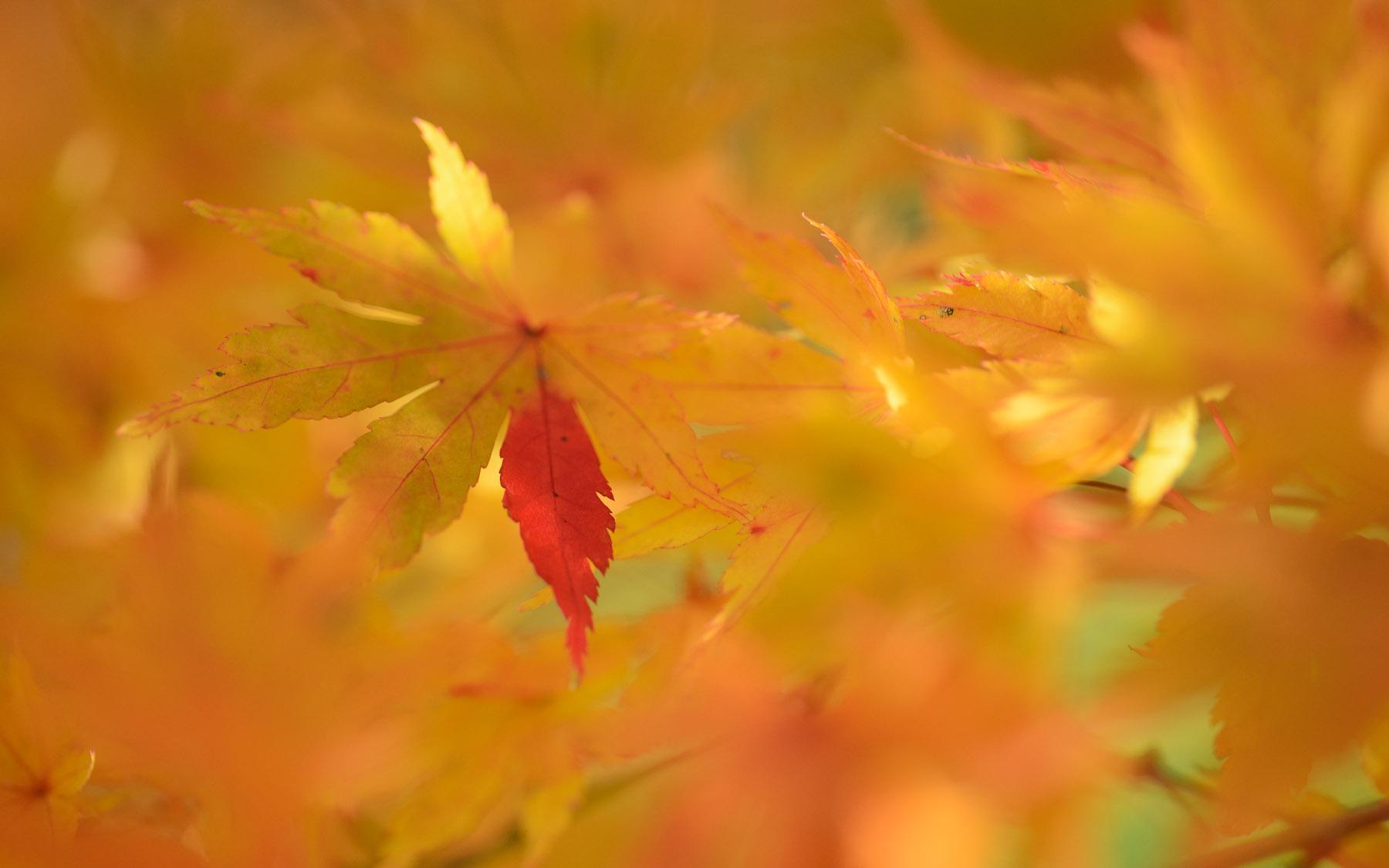 Abstract Fall Colors Wallpaper Jeffrey Friedl S Blog 187 Revisiting December S Arashiyama