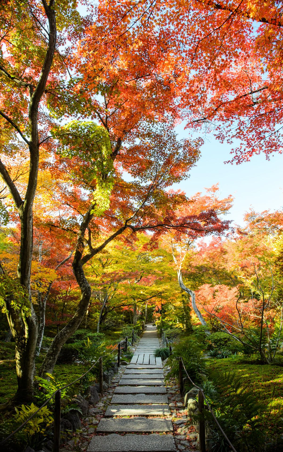 Fall Leaves Desktop Wallpaper Backgrounds Jeffrey Friedl S Blog 187 Fall Foliage At Kyoto Arashiyama S