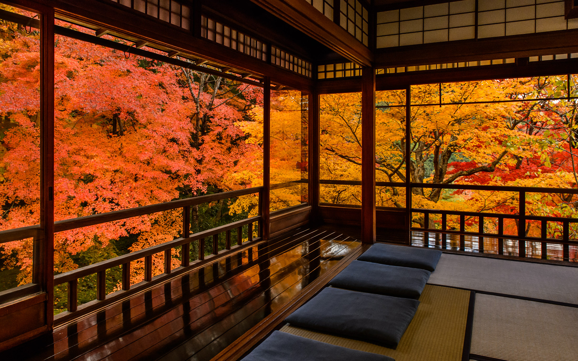 Fall Wallpaper Japan Kyoto Photo Fall Colors From Inside Ruriko In Temple