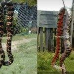 serpiente federacion