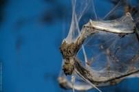 Raupen in der Hasenheide