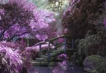Healing Anxiety with Sei Hei KI