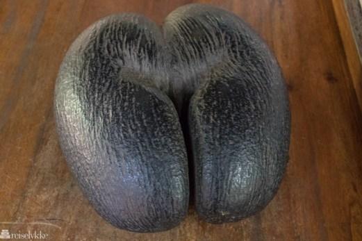 Den berømte kokosnøtten Coco de Mer, Praslin, Seychellene