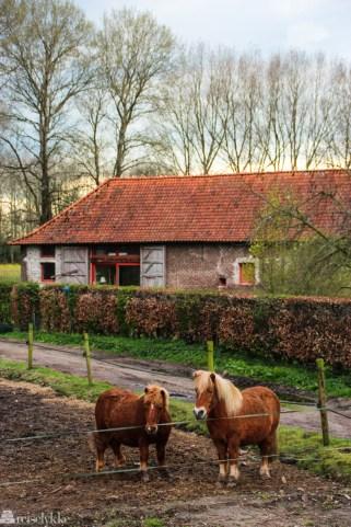 Hester i Flandern