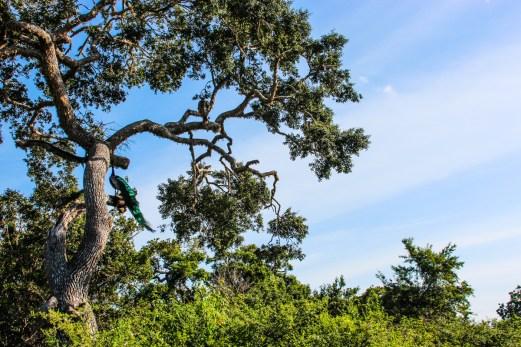 Sarari i Yala national park