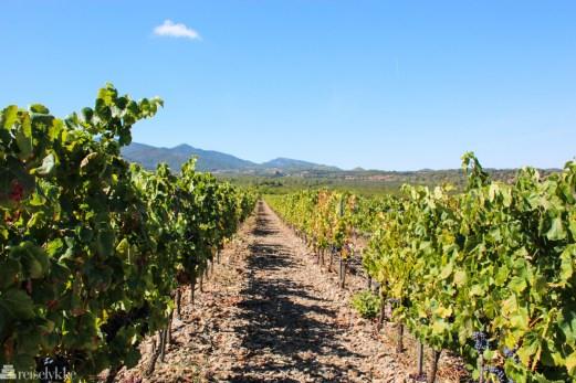 Grans Muralles vinmarker