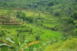 Blick auf Reisterrassen aus dem Zug