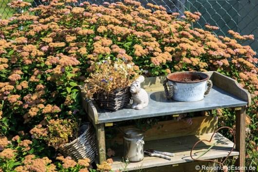 Häschen und Pflanzen zur Begrüßung