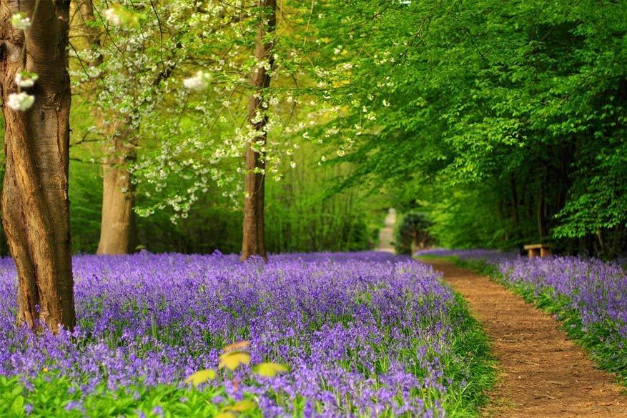 Voorjaarsuitje tuinen kijken in kent reisreporter for Mooie tuinen kijken