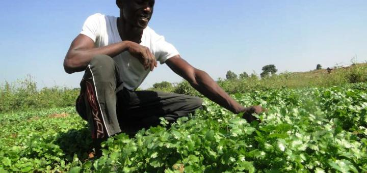 Kennedy Murage, who dropped out of the university is now making a living out of farming. [Photo Omondi Gwengi]