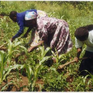 Land remains elusive for women. Reject file picture