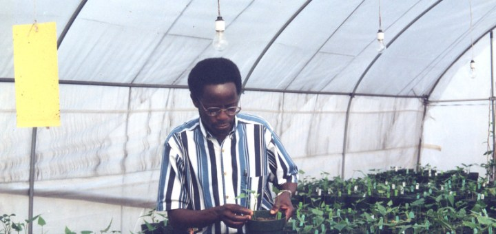 Top Scientist Dr Robert Mwanga of Uganda doing what he loves. Photo Courtesy