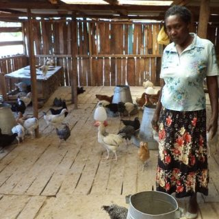 Teresia Macharia taking care of her chicken in her farm in Nyeri .Picture :Waikwa Maina