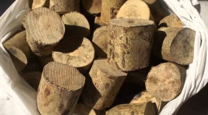 kayu-ular-papua