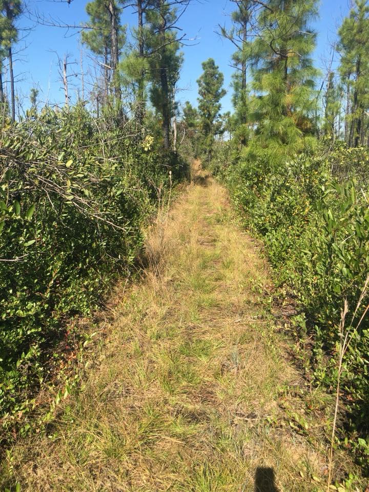 swamp fox 8 julie