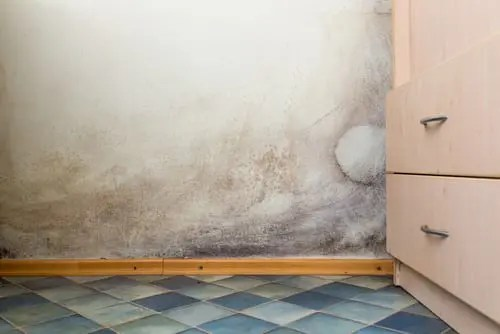 Black Mold Under Wallpaper 3 Signs You Have A Water Leak In The Bathroom Reliance