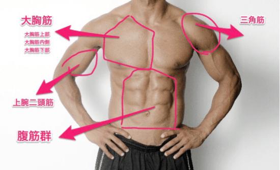 胸筋を構成する3つの部位