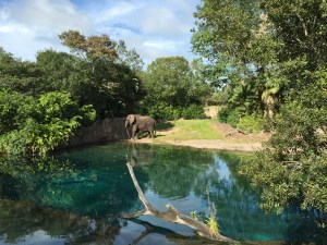 Where else do you get to see an elephant by the pool and in the majesty of his natural habitat the same day as your half marathon?