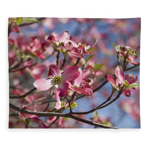 Medium Crop Of Pink Dogwood Tree