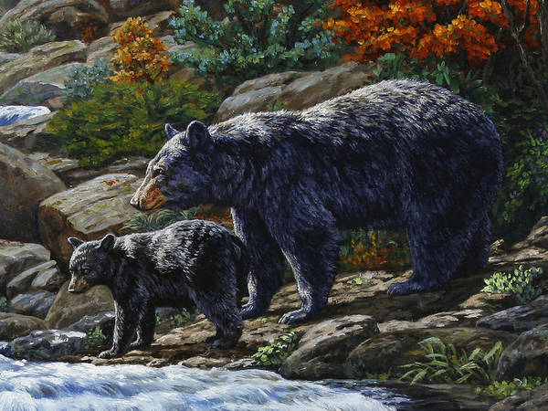 Iphone 5 Wallpaper Dimensions Black Bear Falls Detail Art Print By Crista Forest