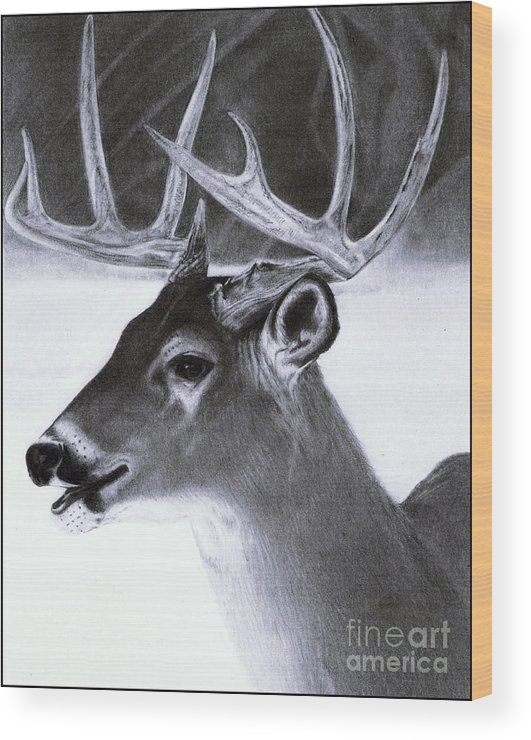 pencil drawings of deer - Pinarkubkireklamowe