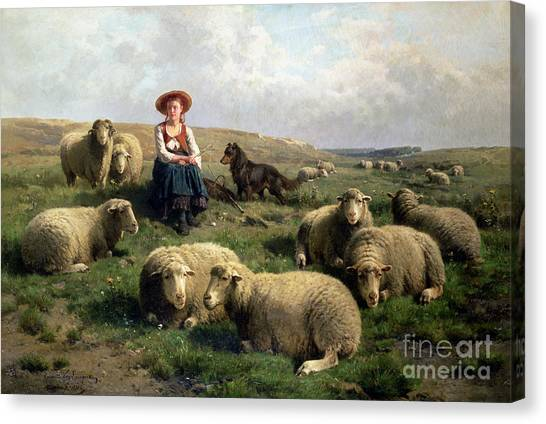 Sheep Art Fine Art America